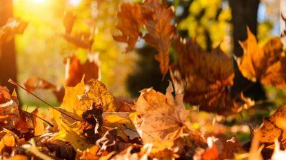 Herfst in het land, maar laatste stuiptrekkingen van de zomer: opnieuw 20 graden deze week