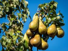 Fruittelers Kromme Rijnstreek rekenen wél op goede oogst