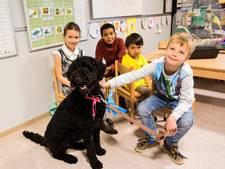 'Schoolhond' Toos biedt troost na het ruziemaken