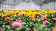 Crevits kondigt compensatiepremie en waarborgregeling aan voor land- en tuinbouwers