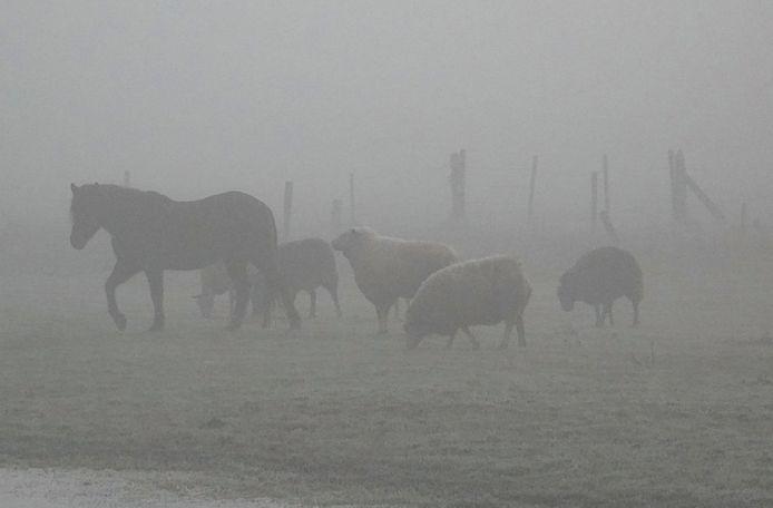 De mist zorgde voor idyllische beelden.