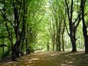 Bos op de Amerongse Berg.
