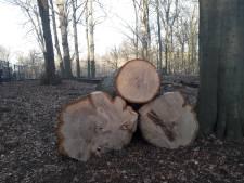 Kap-affaire Tilburg: dikke bomen, dure les