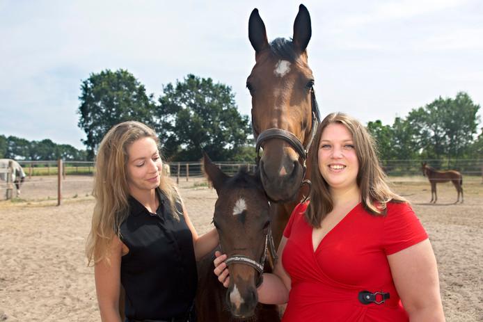 paardenliefhebbers dating