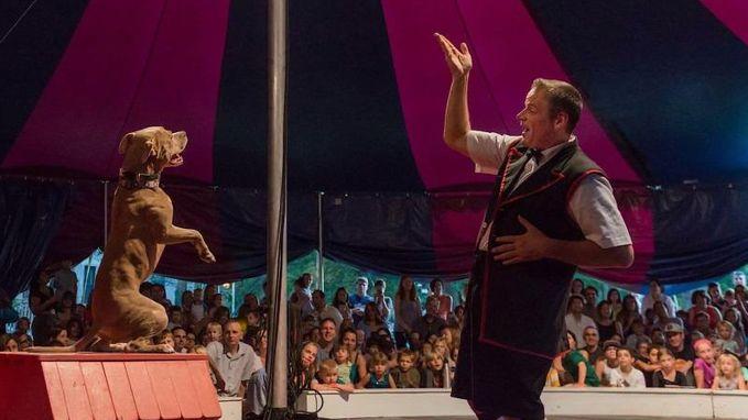 Geen olifanten of leeuwen, maar geredde pitbulls stelen de show in circus