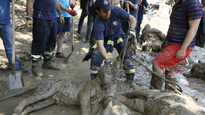 Een reddingswerker ruimt een dode tijger in Tbilisi.