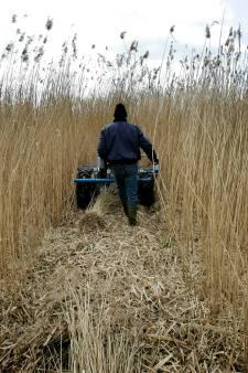 Halvering vergoeding rietsnijders is doodsteek voor Weerribben-Wieden