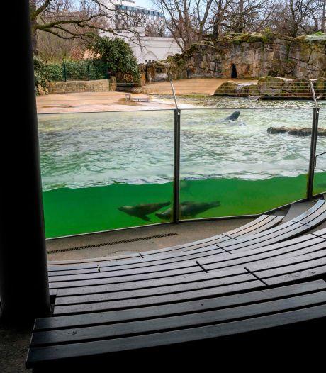 Dierentuinen, de Efteling en Disneyland Paris: zo zien ze eruit zonder bezoekers