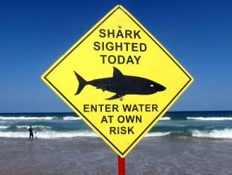 Haai bijt hand af van zwemmer in Australië, 55-jarig slachtoffer overleden