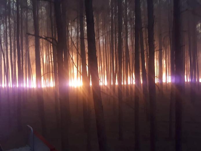 De brand in de bossen van Treuenbrietzen nabij Berlijn brak donderdagmiddag uit en verspreidde zich razendsnel.