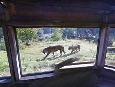 Op deze manier kost een bezoek aan Burgers' Zoo je helemaal niks