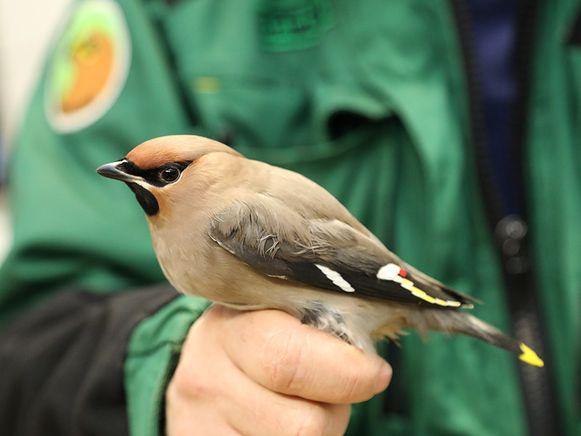 Een in beslag genomen vogel