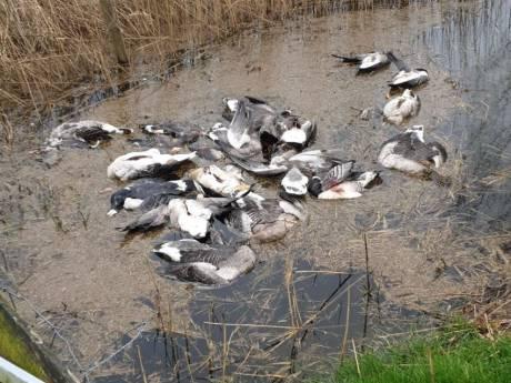 Duizenden euro's voor gouden tip in 'misselijkmakende' ganzenmoord