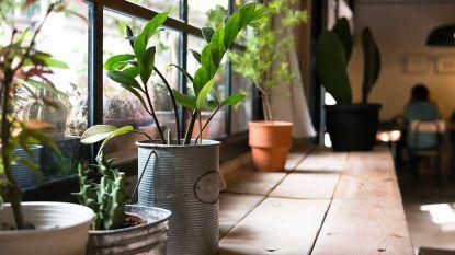 Zo houd je je kamerplanten ook in de winter mooi en gezond