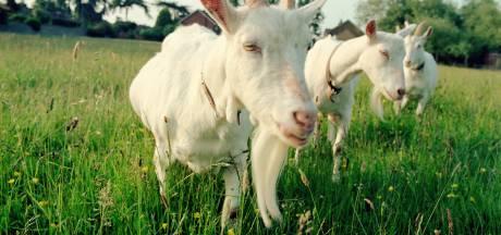 Dieren niet meer voeren bij 't Dierenwaaike in Hapert