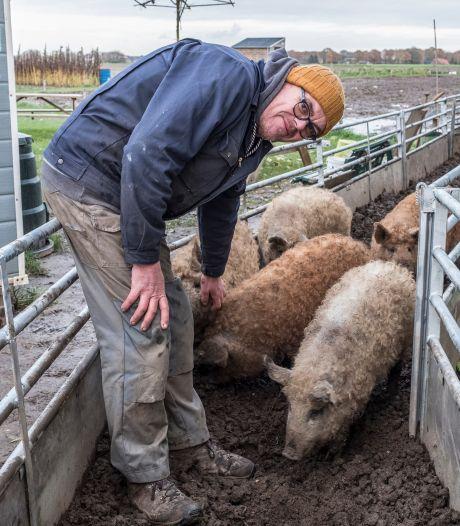 Fake Mulder begon een stadstuin in Ottersum, maar nu balen de buren van zijn Hongaarse wolvarkens