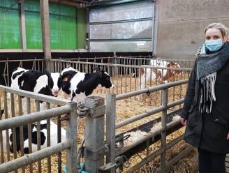"""Van sensortechnologie tot mestrobots, Hooibeekhoeve gaat voor duurzame zuivel: """"We willen andere melkveehouders inspireren"""""""