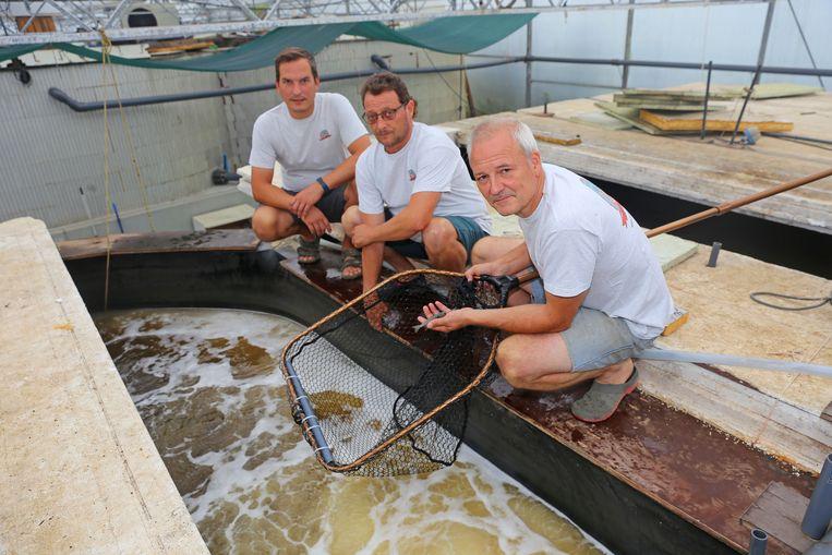 Eric De Muylder (rechts) met medewerkers Stijn Boulpaep en Arie Van den Broeck. Zondag houdt de gambakweker opendeur.