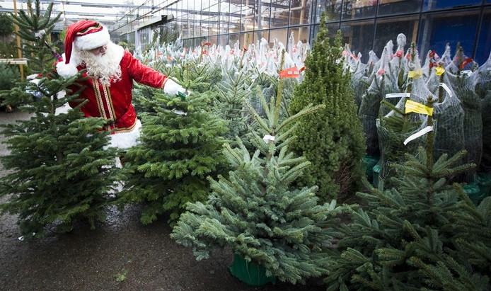 Overal Kerstbomen Te Koop Overig Ed Nl