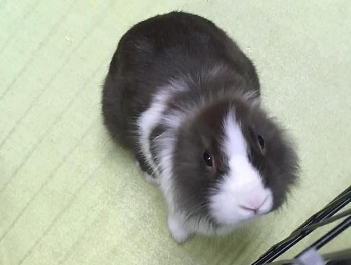 Het konijn zonder oren en zonder staart werd gevonden op de Johann Sebastian Bachstraat in Utrecht.
