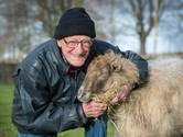 Hartje Breda: Vrijwilliger Ton (89) is klaar met uitmesten bij kinderboerderij in Breda-Noord