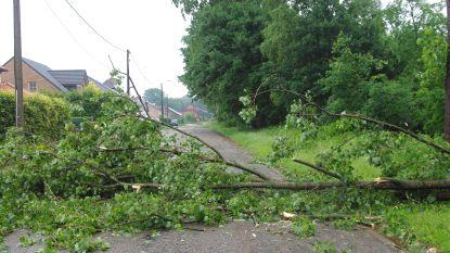 Her en der stormschade in Torhout: werfhekken waaien op geparkeerde auto