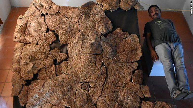 Een paleontoloog naast het gigantische schild van de Stupendemys geographicus.
