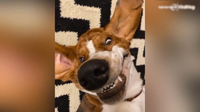 De lach van deze hond maakt je dag meteen goed