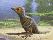 Nieuwe technieken leggen geheim van 127 miljoen jaar oud kuiken bloot