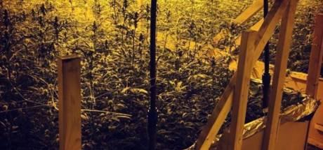Celstraffen geëist voor hennepteelt met duizenden planten in Emmeloord in Lelystad