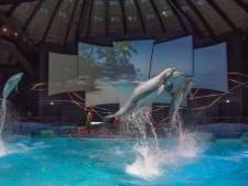 Dolfinarium in Harderwijk vernieuwt nu ook de zeeleeuwenshow