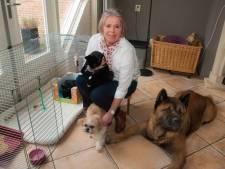 Poes aan het infuus of een blinde hond? Ellen weet raad