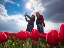 Tulpenseizoen trekt recordaantal bezoekers naar Flevoland