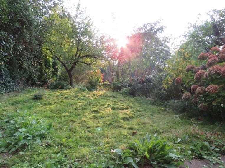 Hoe kun je nou een levenloze tegel-, grind-, of plankenvlakte verkiezen boven de troostrijke schoonheid van een levende tuin? Beeld Koos Dijksterhuis