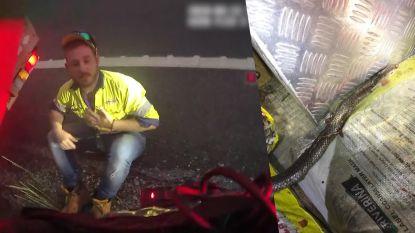 Man vecht met slang in zijn auto terwijl hij over snelweg rijdt