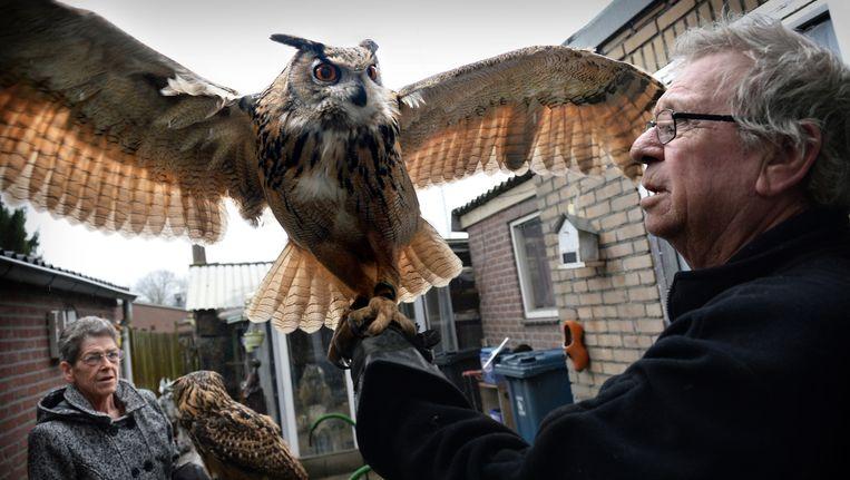 Bert van Bilsen uit Schijndel heeft veel roofvogels als huisdier, waaronder een oehoe. Beeld Marcel van den Bergh / de Volkskrant