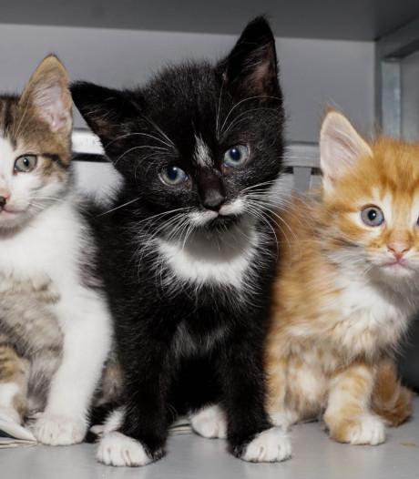 Stichting Zwerfkatten stoort zich aan uitspraken provincie Utrecht