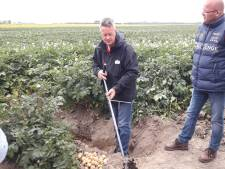Internationaal crisisplan voor aardappelteelt nodig
