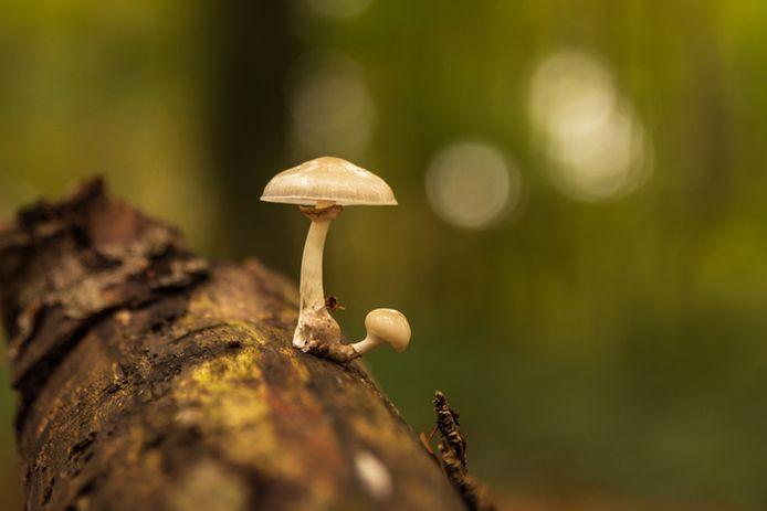 Ad Verhoeven uit Lage Zwaluwe vond dit mooie exemplaar tijdens een boswandeling in het Liesbos in Breda.