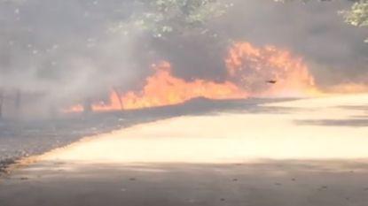 Brandweer bestrijdt bos- en grasbrand in Houthalen-Helchteren