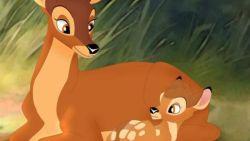 Straf voor hardleerse stroper: gevangenis in én naar Bambi kijken