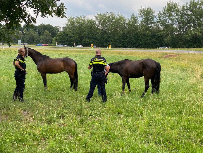 De paarden werden tot de komst van de dierenarts even vastgehouden door de toegesnelde agenten.