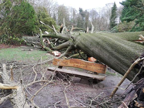 Heel veel omgevallen bomen op het domein van de Franciscanessen.