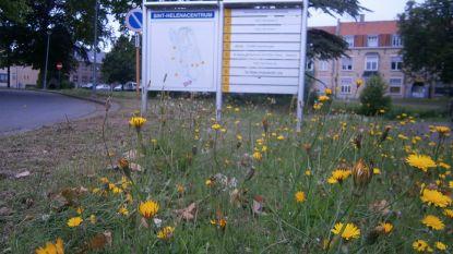 Gemeente kiest voor natuurvriendelijker graslandbeheer