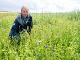 Boer Paul uit Bergentheim wil akkervogels best helpen, zolang die zijn koeien maar met rust laten