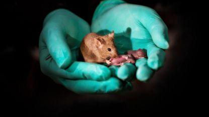 Chinese wetenschappers creëren muizen met twee moeders, zonder vader