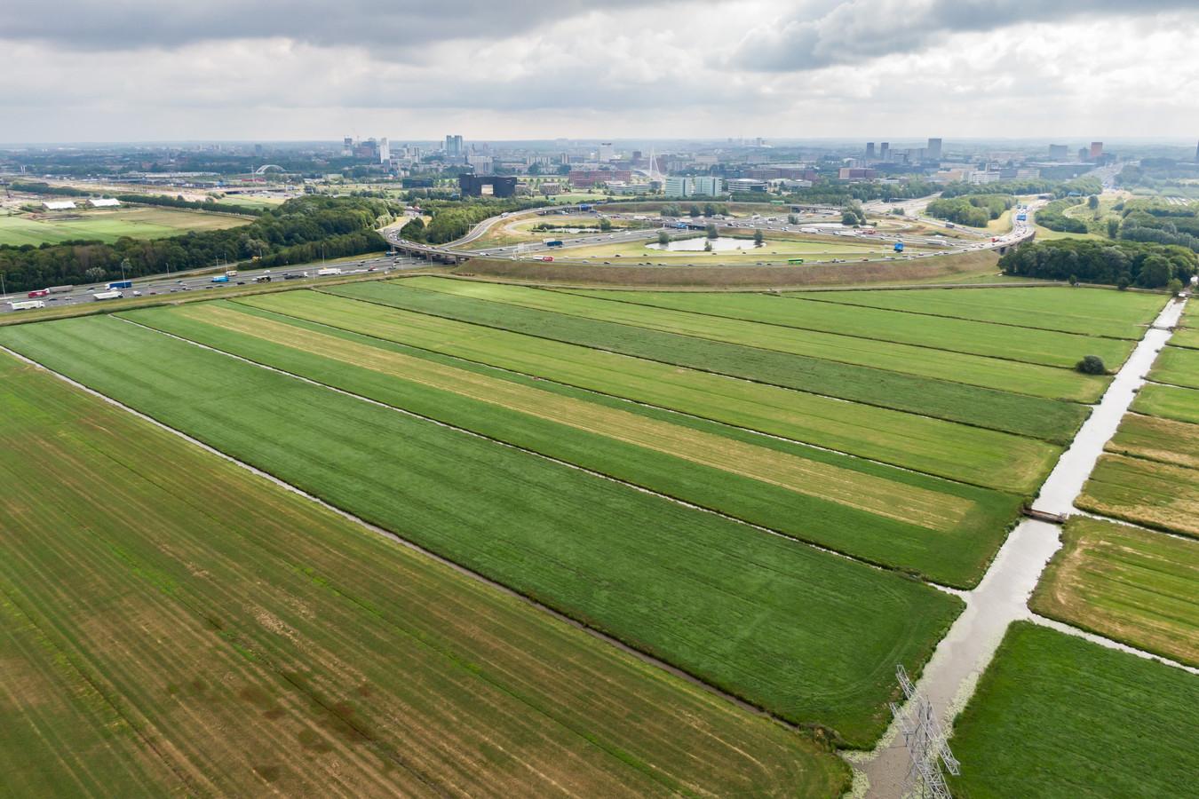 Polder Rijnenburg bestaat nu nog voornamelijk uit weiland. Volgens VVD-raadslid Tess Meerding moeten er ten minste 25.000 woningen gebouwd worden.
