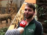 Bevalling op komst: verzorgers slapen in hangmat 'bij' olifanten