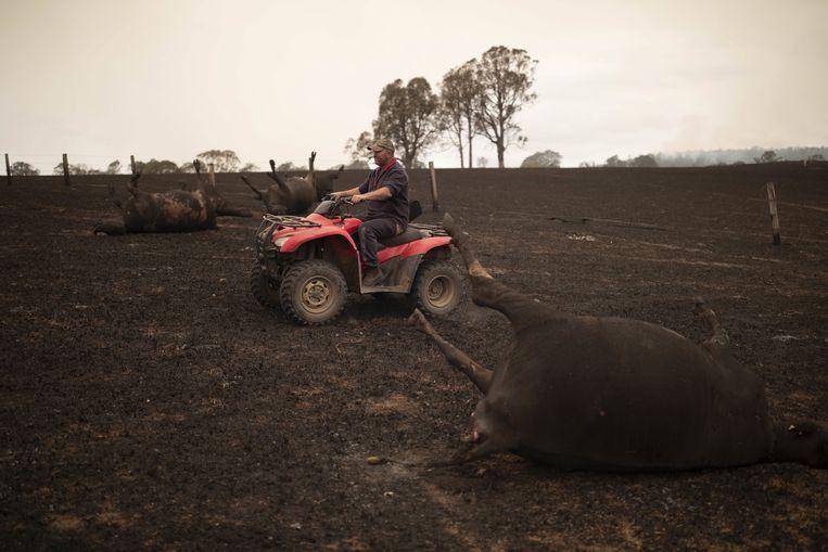 Een boer op zijn verbrande veld in Coolagolite, New South Wales. De man maakt zelf de dieren af die te zwaar gewond zijn geraakt door het vuur. Beeld EPA