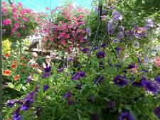 Open tuindagen met fuchsia's in veel soorten bij Dussense familie Leenhouts